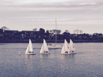 Caught some sailing action in Marina Del Ray.